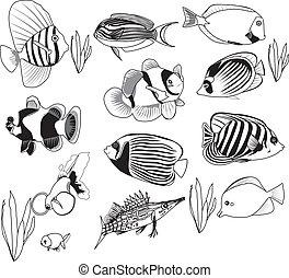Fischset