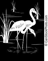 flamingo, see
