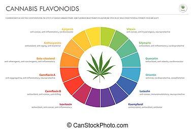 flavonoids, cannabis, geschaeftswelt, infographic, horizontal