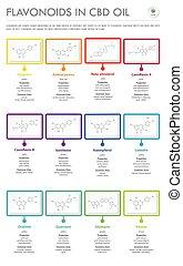 flavonoids, oel, geschaeftswelt, formeln, infographic, strukturell, cbd, senkrecht
