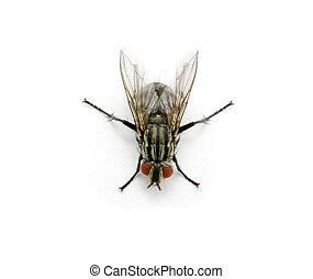 Flieg auf einem weißen