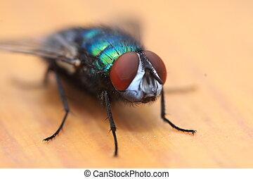 Flieg