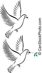 Flug der Taube