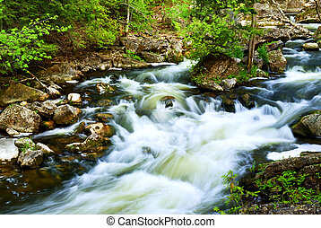 Fluss durch den Wald