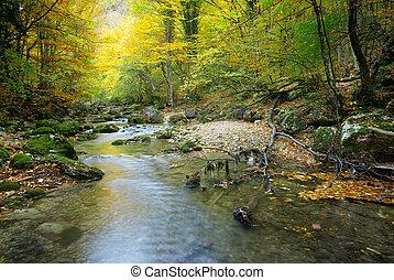 Fluss im Herbstwald