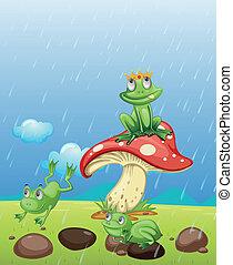 Frösche spielen im Regen.