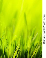 Frühjahrsgrünen Hintergrund abbrechen