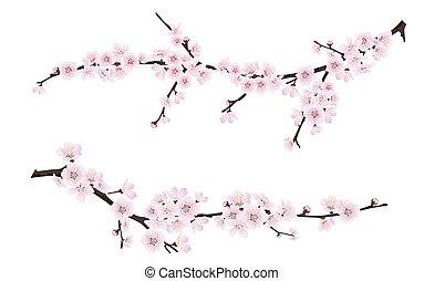 Frühling blühende Baumästen mit rosa Blumen