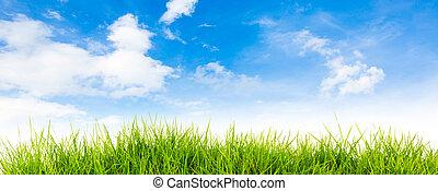 Frühling Natur Hintergrund mit Gras und blauer Himmel hinten , Sommerzeit.