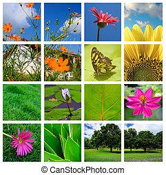 Frühling und Natur kollabieren