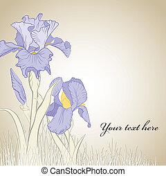 Frühlings-Iris-Blume