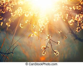 Frühlingsblüten Hintergrund. Schöne Naturszene mit blühendem Baum