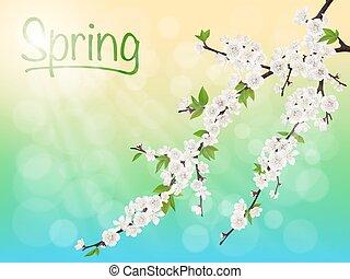 Frühlingsblütiger Kirschzweig mit.