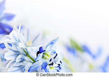 Frühlingsblumen Hintergrund