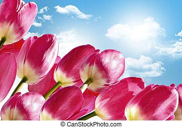 Frühlingsblumen tulips auf dem Hintergrund des blauen Himmels mit Wolken.