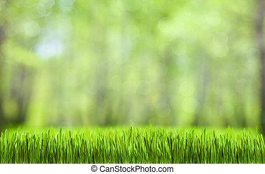 Frühlingsgrüner, abstrakter Wald natürlicher Hintergrund