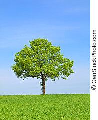 Frühlingslandschaft - grüner Baum am blauen Himmel