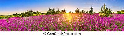 Frühlingslandschaft mit blühenden Blumen auf der Wiese