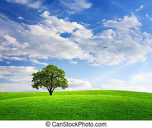 Frühlingslandschaft mit Eichenbaum und blauer Himmel