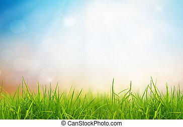 Frühlingsnatur mit Gras und blauer Himmel hinten