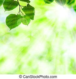 Frühlingssonnestrahl mit grünen Blättern
