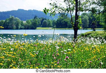 Frühlingswiese.