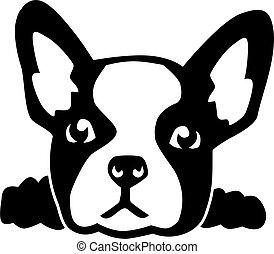 französische bulldogge, kopf