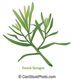 Französisches Tarragonkraut