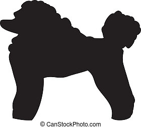 franzoesischer pudel, silhouette, hund