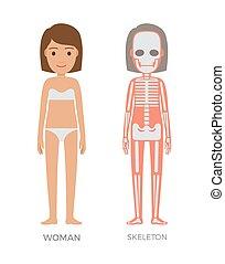Frau Anatomie und Skelett Struktur farbigen Banner.