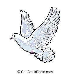 Frei fliegende weiße Taube, isolierte Zeichnungen