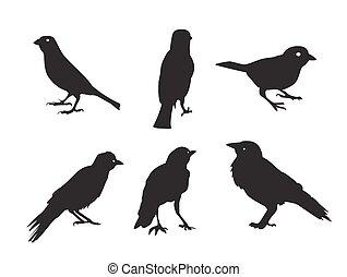 freigestellt, abbildung, silhouetten, vektor, weißes, vögel