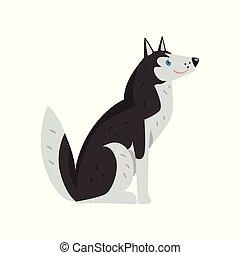 freindly, zeichen, sibirisch, hund, vektor, hintergrund, illustrationen, heiser, weißes