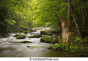 Friedlich große, rauchige Berge, Nationalpark, nebliger tremont-Flus, entspannende Naturlandschafts-Stücke bei Gatlinburg TN
