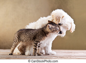 friends, -, hund, zusammen, katz