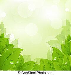 frisch, blätter, grün