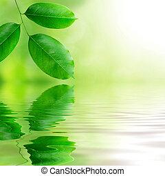 frisch, blätter, grüner hintergrund