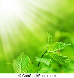Frische grüne Blätter und kopieren Spas