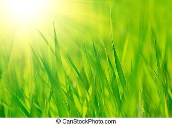 Frisches Frühlingsgras und helle, warme Sonne