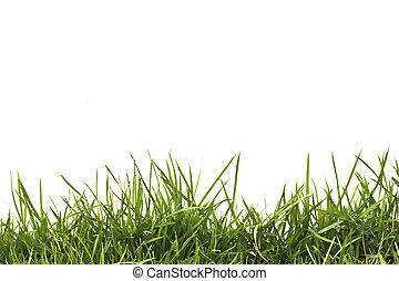 Frisches grünes Grüngras, isoliert auf weißem Hintergrund.
