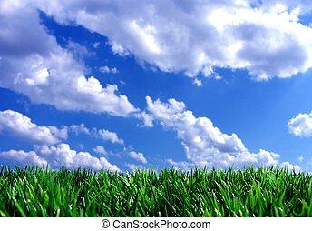 Frisches grünes Gras mit blauem Himmel