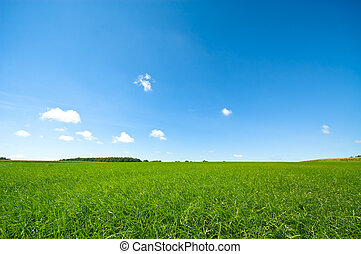Frisches grünes Gras mit hellblauem Himmel.