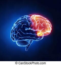 Frontallappen - menschliches Gehirn im Röntgenbild