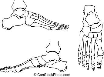 Fußknochen.