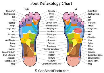 Fußreflexzonendiagrammbeschreibung
