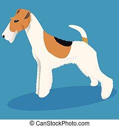 fuchs, draht, terrier, hund