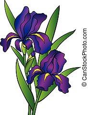 full-color., irises., iris., linear, blätter, gradient., blumen, zeichnung