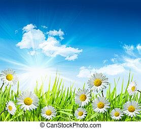 Gänseblümchen und Gras mit hellblauem Himmel