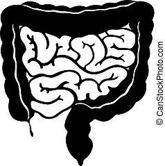 Gastrointestinaltrakt.