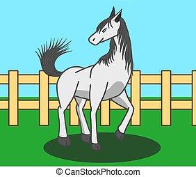 gehen, weißes, field., pferd, weibliche